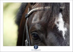 Horsephotographyjohannesburgphotographer02